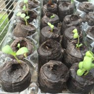 Starting Seeds Indoors with Recycled Items –