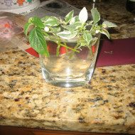 Simple Propagation or Kids Science Experiment