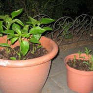 Container Gardening For Small Outdoor Spaces