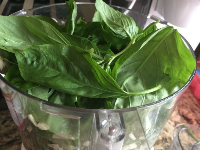 How to grow basil and pesto recipes