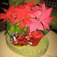 quick tip-leftover Poinsettia Plants