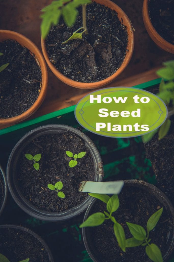 Learn How to Seed Plants at home