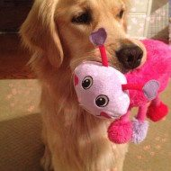 Luv-a-Pet Dog and Cat Toys From Petsmart Givea