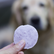 How to make Homemade Frosty Paws or Homemade Frozen Dog Treats