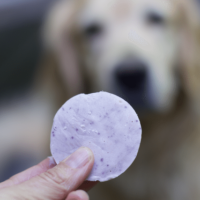 Homemade Frozen dog Treats or Frosty Paws