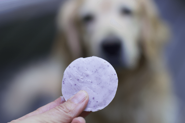 How to make Frosty Paws or Homemade Frozen Dog Treats 2