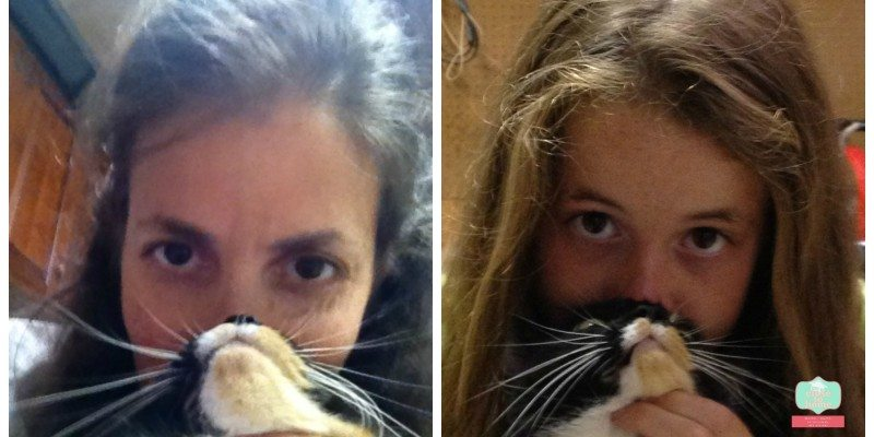 mother daughter cat bearding #shop #clubfreshstep