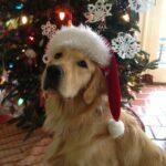 Pet Care Products Deals BOGO Deals