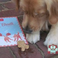Holiday Buddy Biscuits Coupon Code and Review