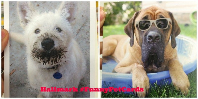 Hallmark funny pets