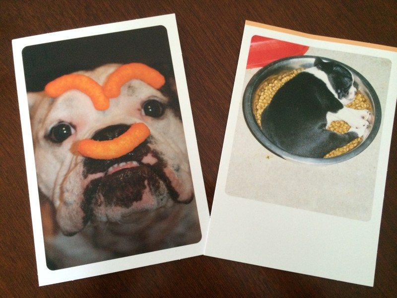funny pet cards