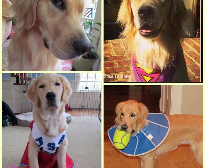 How to Capture Photos of your Funny Pets