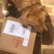 Bugsy's Dog Subscription Box #Giveaway #ad