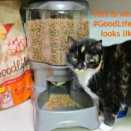 Celebrating Gotcha Day with #GoodLifePet Dry Cat Food
