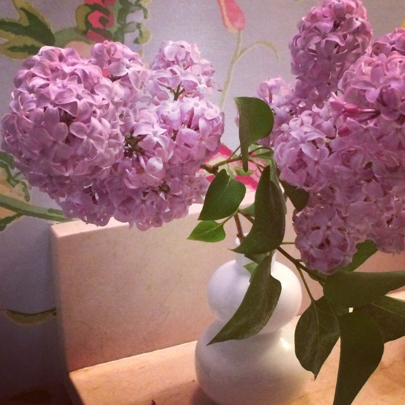 lilac-flowers
