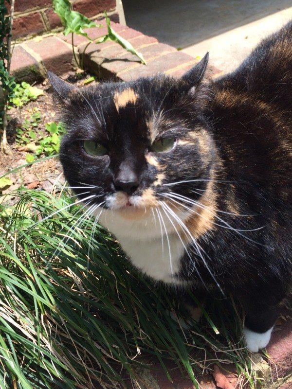 fleas-and-ticks-cats