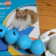 Dog Days of Summer–Great Pet Products to keep your Pup happy