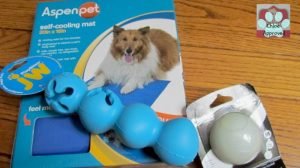 Great Pet Products to keep your Pup Active in the Summer