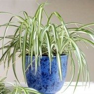 How you should take care of houseplants in the winter