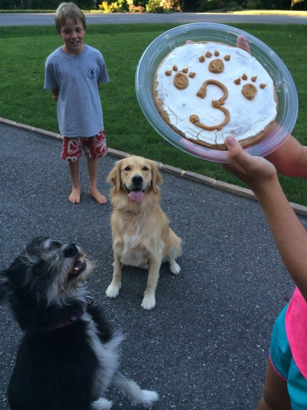 Don't miss our easy Homemade Dog Cake Recipe that is perfect for helping you celebrate your pups special day! This easy recipe is a great treat for dogs!