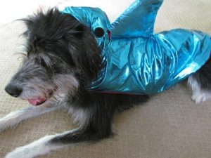 Halloweeen Costumes for dogs