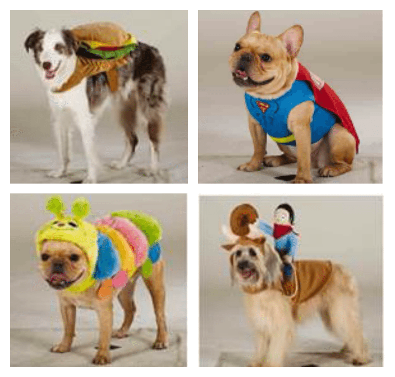 Celebrate Halloween with your Pets
