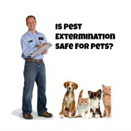 Is Using a Pest Exterminator Safe for your Pets?