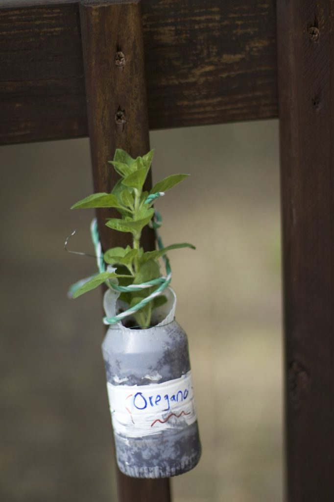 plastic-bottle-plant