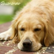 Dog Care-How to Keep Dogs Safe in the Summer