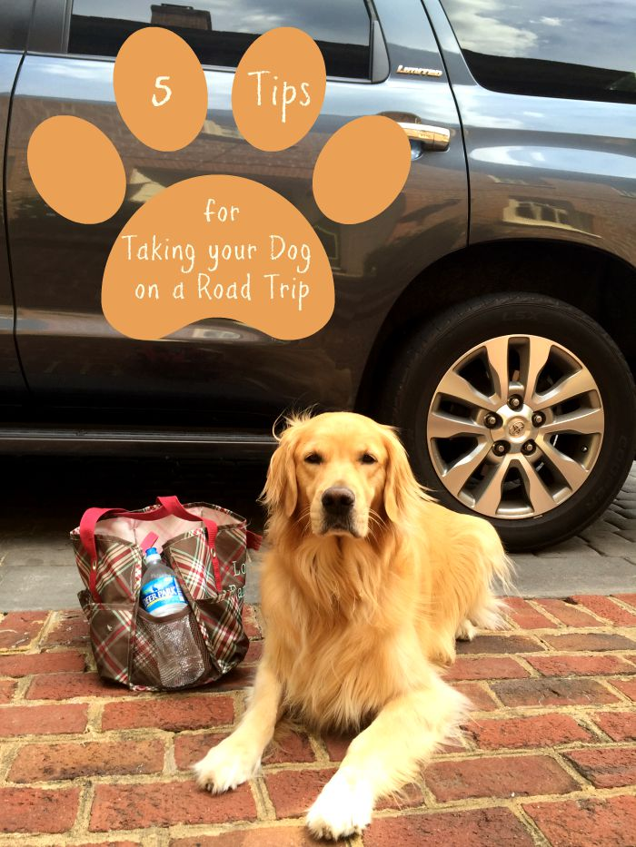 5 Packing Tips For Traveling With Your Dog