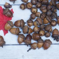 Decorating and Preserving Acorns for Fall Decor