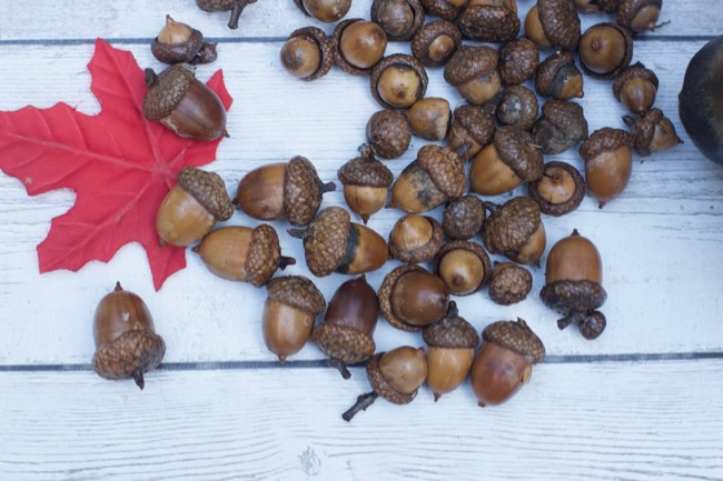 crafting with acorns