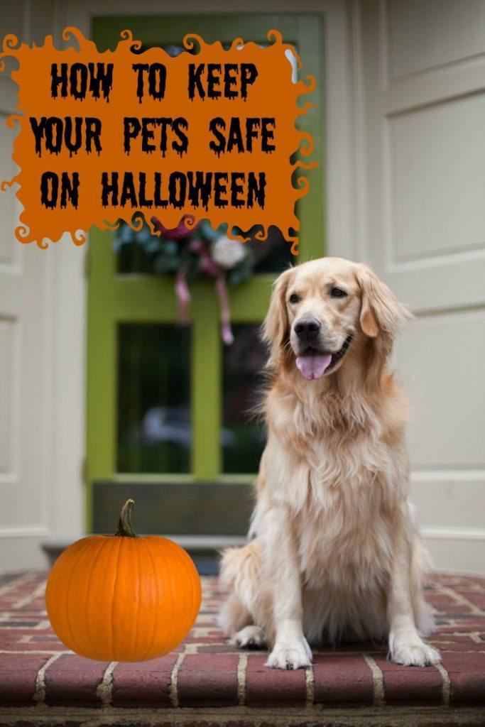 pet safety Halloween