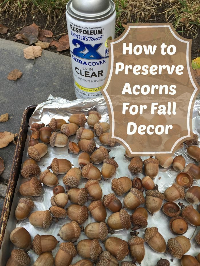 how to preserve acorns