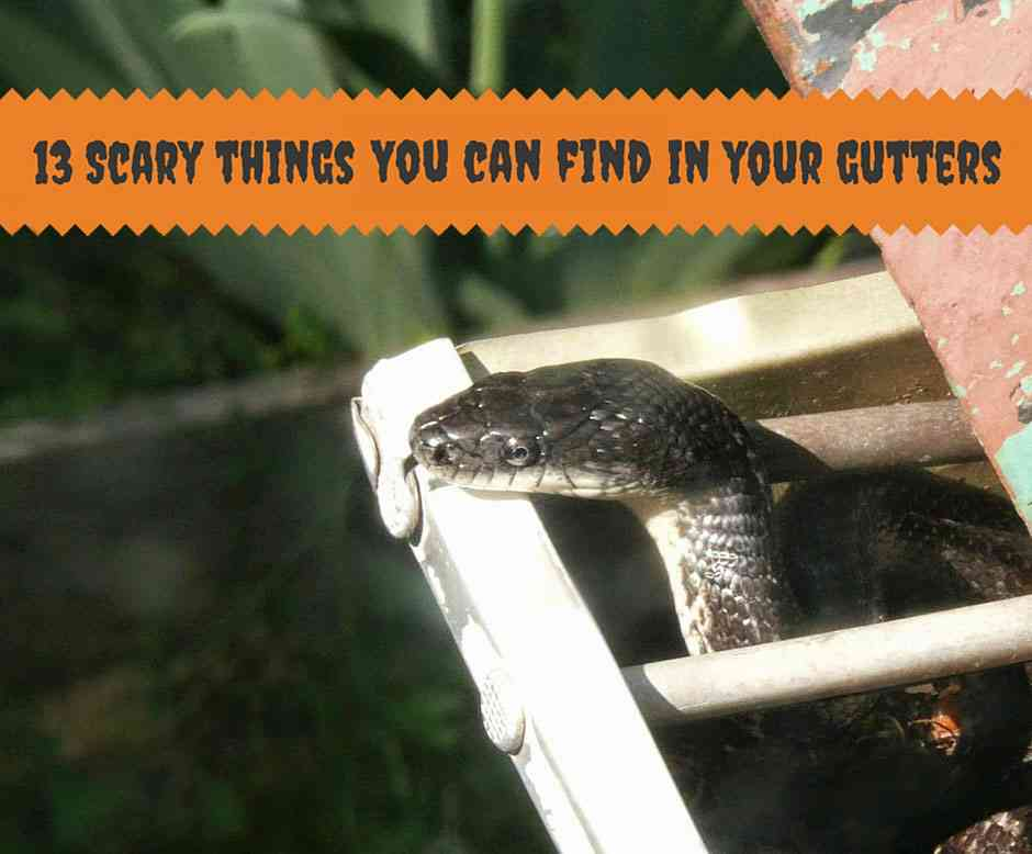 13 Scary things you can find in your gutters
