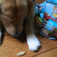 Pet Stocking Stuffer Ideas