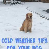 Vital Cold Weather Tips for Dogs