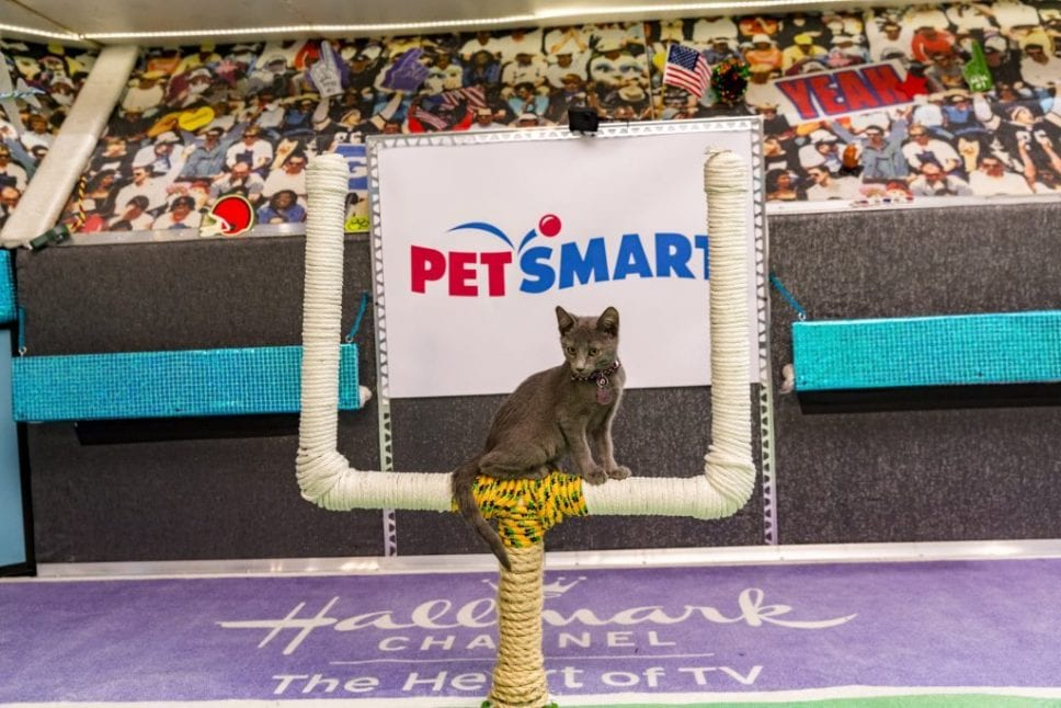"""""""Kitten Bowl"""" is a feline catstravaganza presented in association with North Shore Animal League America (the nation's largest no-kill shelter and animal adoption organization) and Last Hope Animal Rescue and Rehabilitation. Hosted by Beth Stern, TV personality and national spokesperson for North Shore Animal League America, """"Kitten Bowl"""" is a star-studded lineup that includes legendary New York Yankees radio voice John Sterling and award-winning reporter, sports analyst and commentator Mary Carillo as """"Kitten Bowl's"""" official play-by-play announcer, and Boomer Esiason as the Feline Football League's (FFL) Commissioner. Photo: Credit: Copyright 2015 Crown Media United States, LLC/Photographer: Marc Lemoine"""