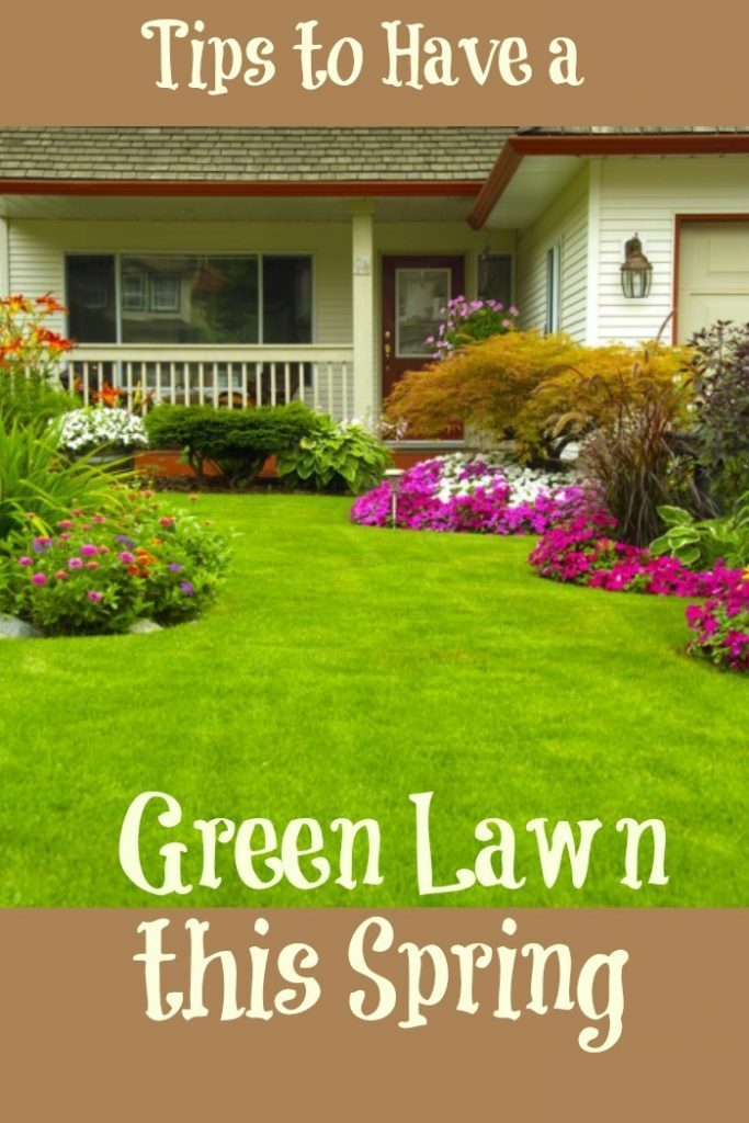 Tips for green lawn