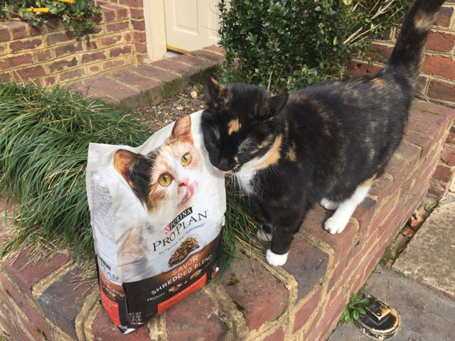 purina pro plan cats