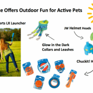 Healthy Outdoor Exercise Routine For Your Dog