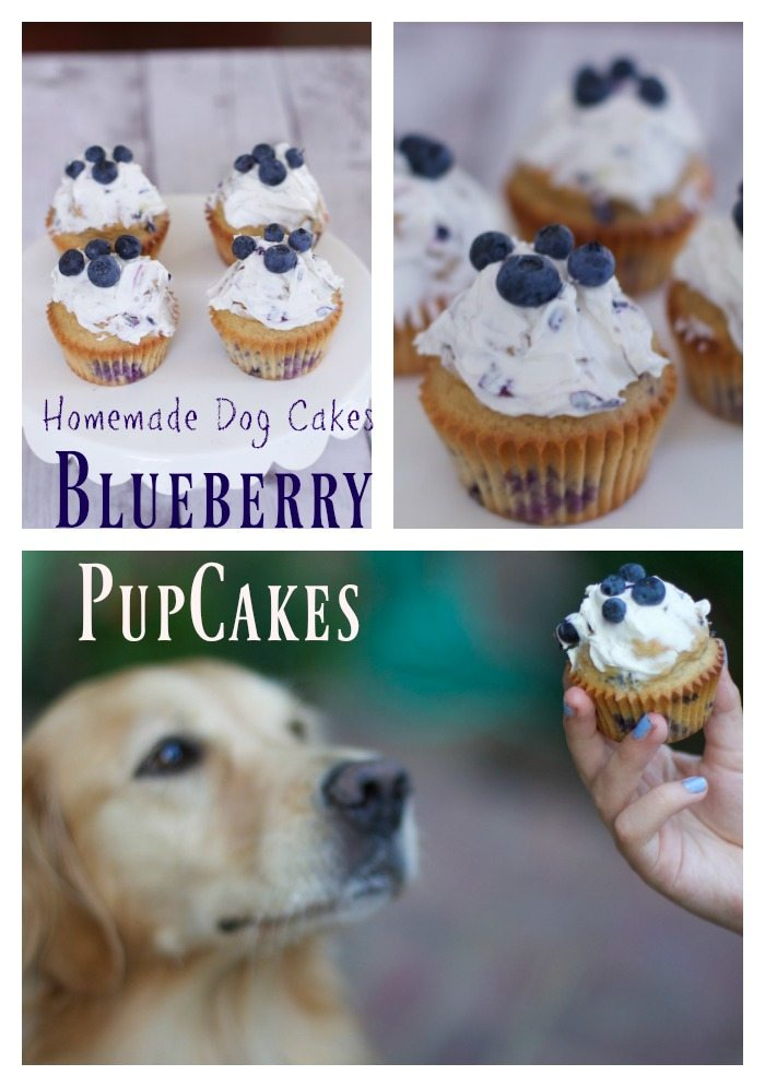 Homemade dog cake made with blueberries, pupcakes recipes