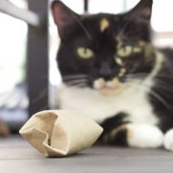 How to Make an Incredibly Simple DIY Cat Puzzle Toy