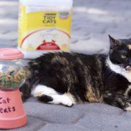 DIY Cat Treat Holder