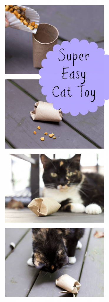 How to make an incredibly simple diy cat puzzle toy for Diy easy cat toys