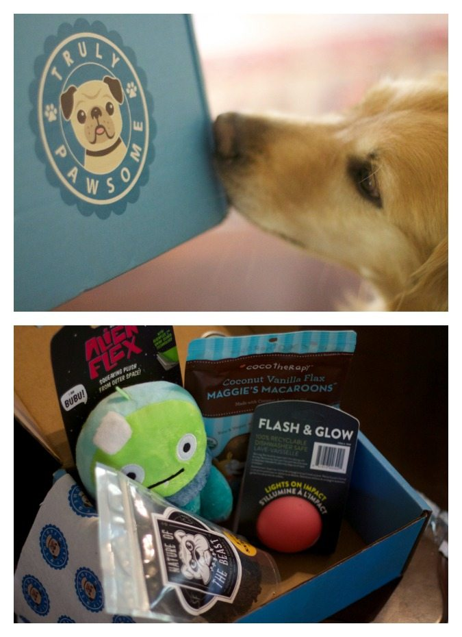 Must have gifts for pets