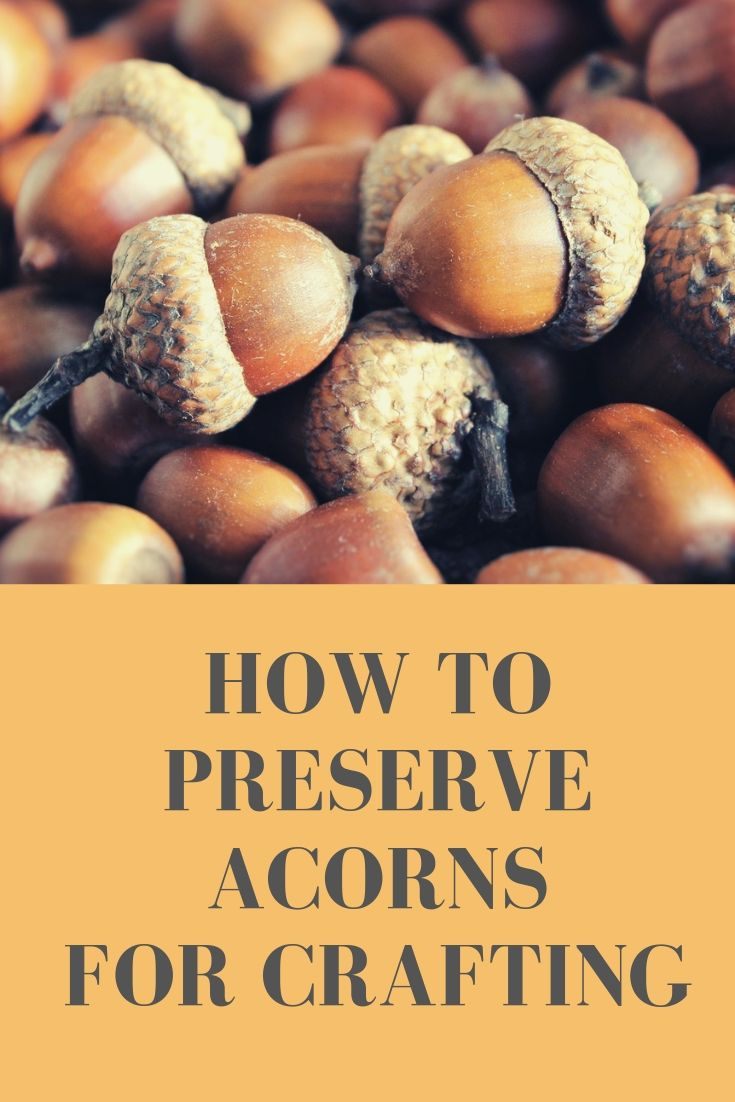 how to preserve acorns for crafts