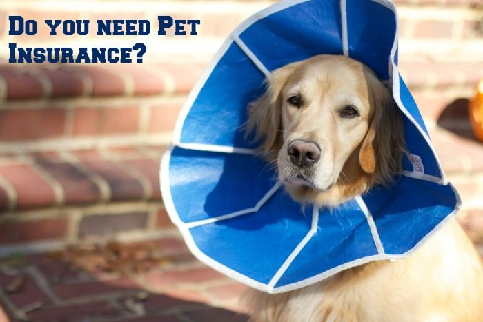 Do You Have Pet Insurance to cover the unexpected?