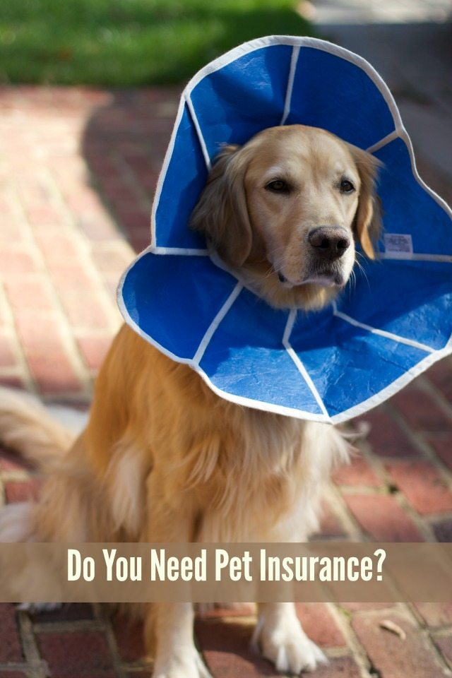 do you need pet instance