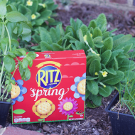 Two Spring Herb Garden Inspired Snacks